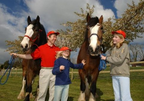 Horses - - Things To Do In Dartmouth